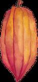 cocoa-illustration-orange