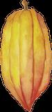 cocoa-illustration-yellow